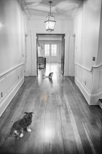 07m03d2011_dog
